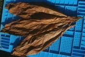 Liście tytoniu Virginia i Burley SUPER JAKOŚĆ