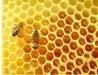 Przyjmę rodziny pszczele, kupię za rozsądną cenę