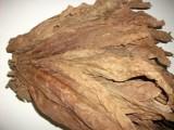 tytoń liscie liście tytoniu tytoń 788 324 606