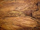 Barley liście tytoniu