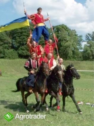 Ukraina.StajniaKoni w malowniczej miescowosciTanio - zdjęcie 2
