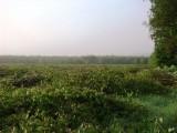 Usługi w zakresie gospodarki leśnej i rolnej