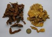 BUŁGARIA - liście tytoniu - DOLNY ŚLĄSK