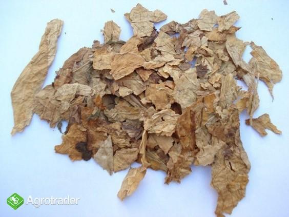 Tytoń VIrginia Burley liść strips