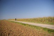 Gospodarstwo Rolne 100 hektarów ; obsiane