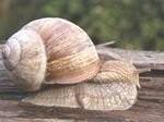 Hodowla ślimaków - koniecznie poznaj ofertę!