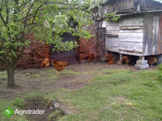 Jaja wiejskie ekologiczne - zdjęcie 1