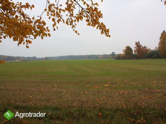 30 ha, Biskupice koło Sycowa, dolnośląskie - zdjęcie 5