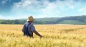 Działka Rolna 30 ha okolice Zielonej Góry