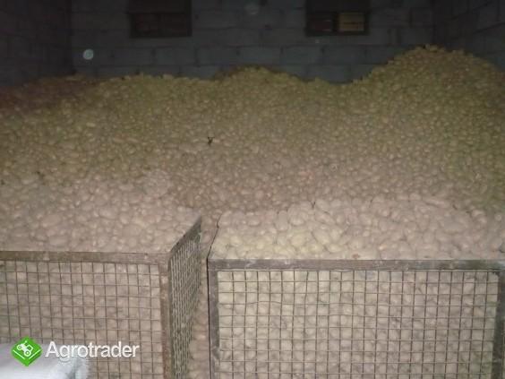 Sprzedam ziemniaki jadalne - zdjęcie 2