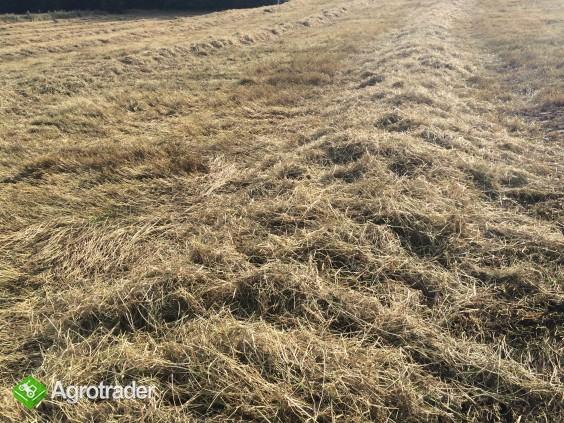 Siano - po desykacji traw nasiennych