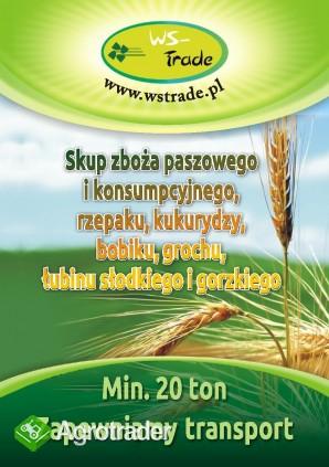 skup pszenicy- kupię pszenicę