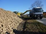 Wysłodki buraczane mokre,prosto zsypu z Kampanii 2017/2018 Krasnystaw