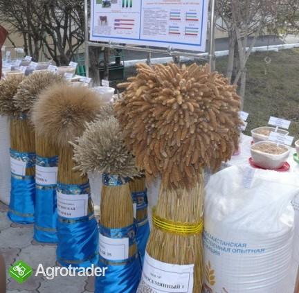 Ukraina. Pasza granulowana w workach, premiksy zbilansowane 300 zl/t
