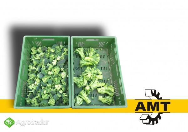 AMT, Maszyna do różyczkowania brokuła, gilotyna, stół  - zdjęcie 2