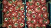 Sprzedamy pomidory