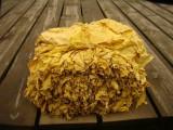Tytoń do palenia, duże ładne liście prosto od producenta