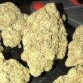 ~~GrandDaddy Purple, OG Kush, Sour Og Kush, Green Crack, Jack Dream, A
