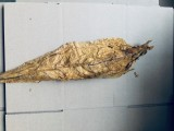 Liście tytoniu ORIENTAL VIRGINIA BURLEY