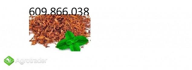TYTOŃ  PAPIEROSOWY  SUPER CENA NAJWYŻSZA JAKOŚĆ TEL:609 866 038