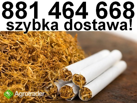 Na sprzedaż tani tyton papierosowy. Tytoń Marlboro, Tyton Korsarz
