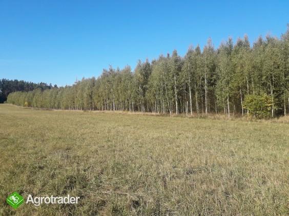 Sprzedam zadbany las z gruntem- 5 ha z dofinansowaniem z Unii do 2027r - zdjęcie 1