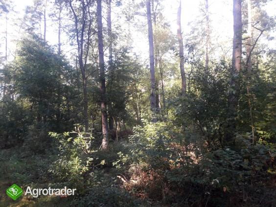 Sprzedam zadbany las z gruntem- 5 ha z dofinansowaniem z Unii do 2027r - zdjęcie 6