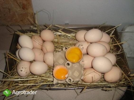 jaja wiejskie ściółkowe i od szczęśliwej kury - zdjęcie 1