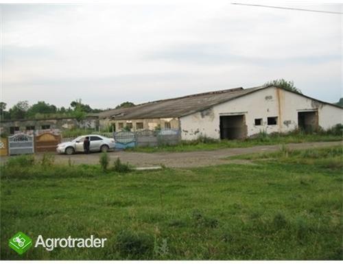 UkrainaGospodarstwa i grunty rolneSprzedaz,wynajem - zdjęcie 2