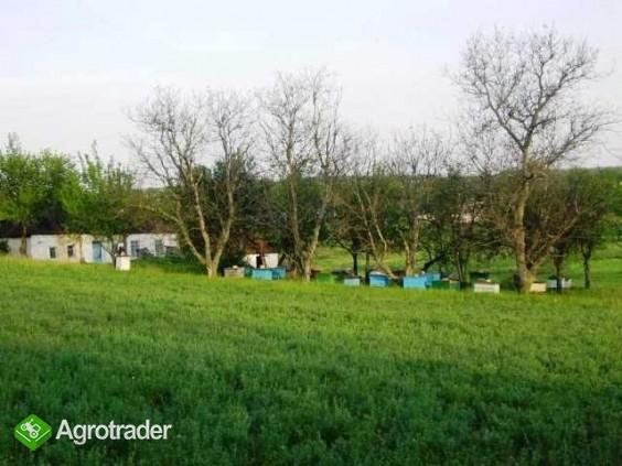 Ukraina.Gospodarstwo rolne+duze arealy ziemi.Tanio - zdjęcie 3
