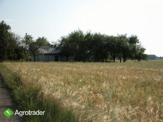 Sprzedam gospodarstwo rolne z budynkami, mazowieckie - zdjęcie 4