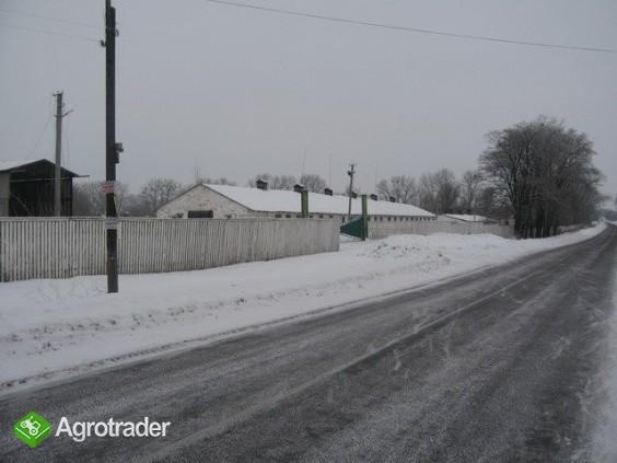 Ukraina.Gospodrstwo rolneFermaTrzody45km od Kijowa - zdjęcie 4